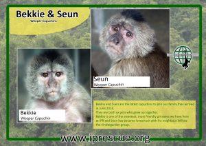 bekkie-and-seun