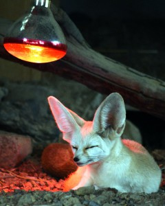 fox sunlamp